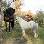 casas-rurales-agapito-sierra-gredos-caballos